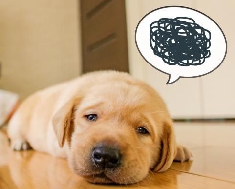 犬_疲れ気味
