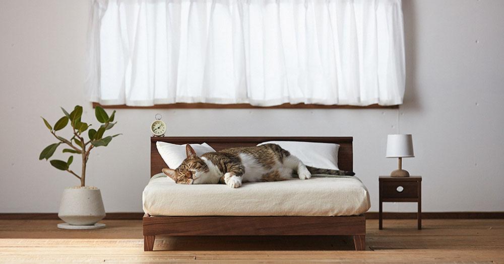ネコ家具ベット画像