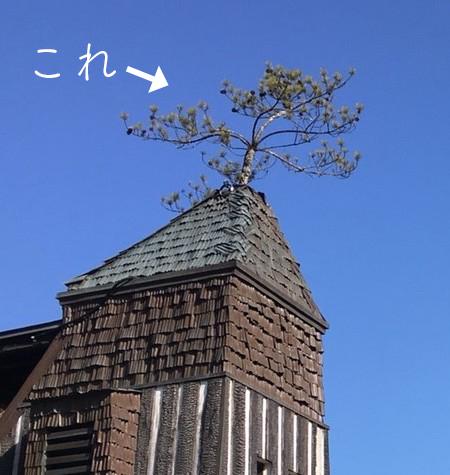 天井部分の画像