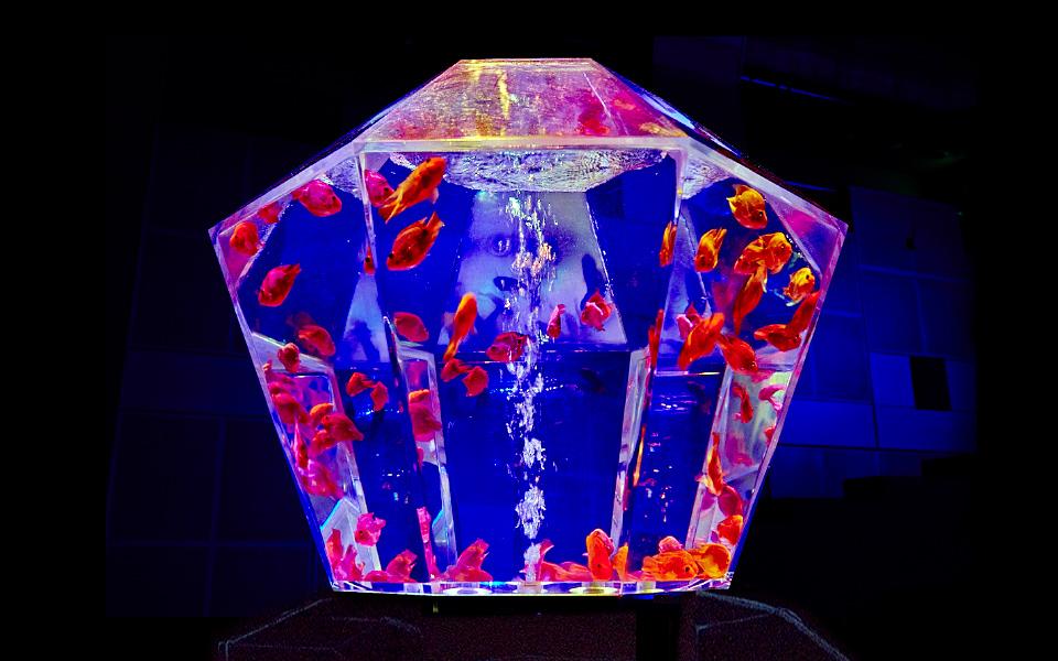 アクアリウム3の画像