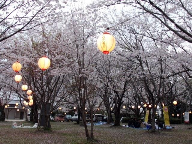 大貞公園桜の画像