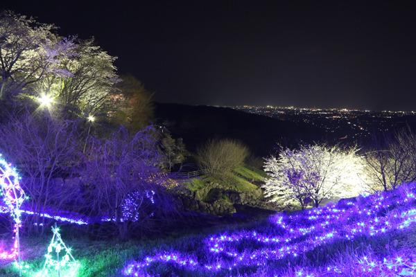 八面山桜イルミの画像