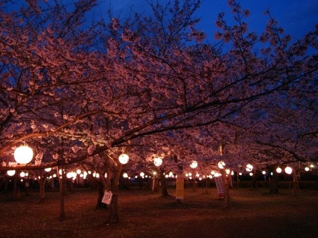 大貞公園夜桜の画像