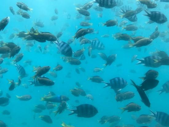オルカ号海中