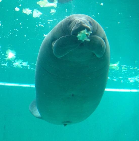 美み水族館ジュゴン
