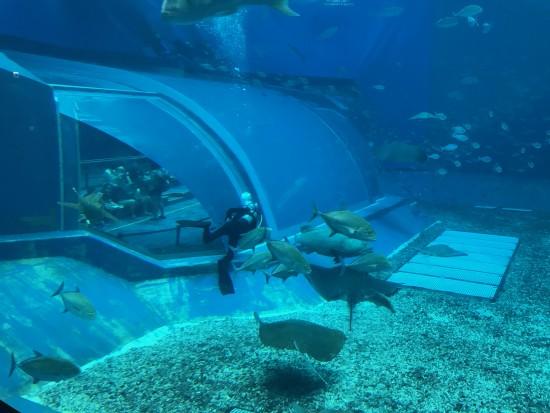 美み水族館清掃