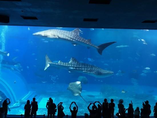 美み水族館