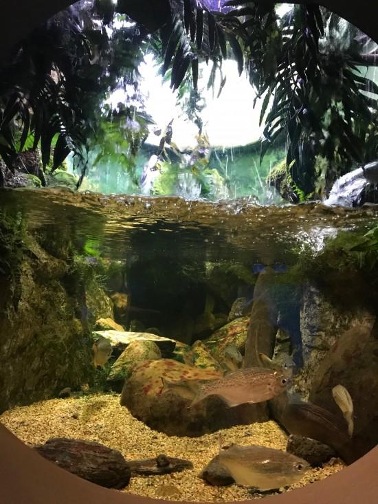 美み水族館の魚